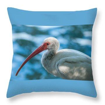 Wild Eyed Ibis Throw Pillow