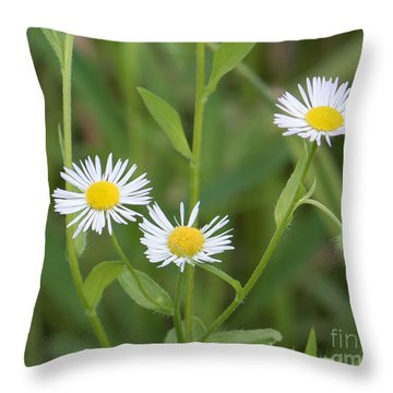 Wild Flower Sunny Side Up Throw Pillow