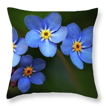Wild Flower Forget-me-not Since The Middle Ages Symbolizes The Celestial Eye And Reminds You Of God Throw Pillow