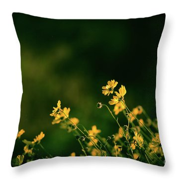 Throw Pillow featuring the photograph Evening Wild Flowers by Kelly Wade