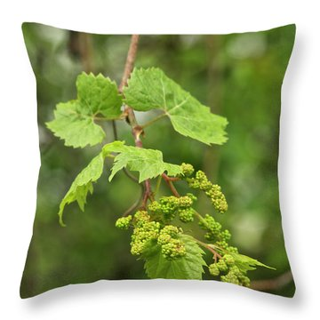 Wild Grapes 1992 Throw Pillow by Michael Peychich