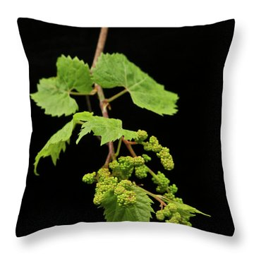 Wild Grapes 1995 Throw Pillow by Michael Peychich