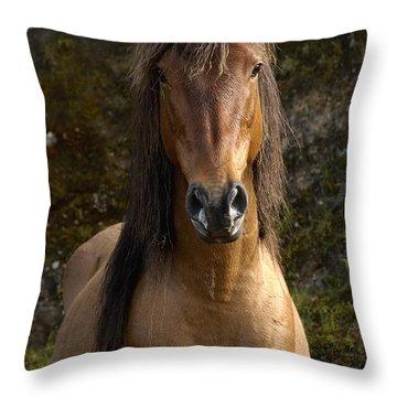 Wild Horse Equus Caballus In Open Throw Pillow