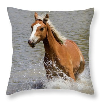 Wild Horse Splashing At The Water Hole Throw Pillow