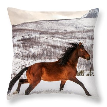 Wild Horse Throw Pillow by Todd Klassy