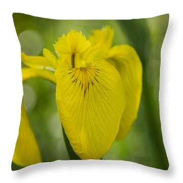 Wild Iris Throw Pillow by Randy Bayne