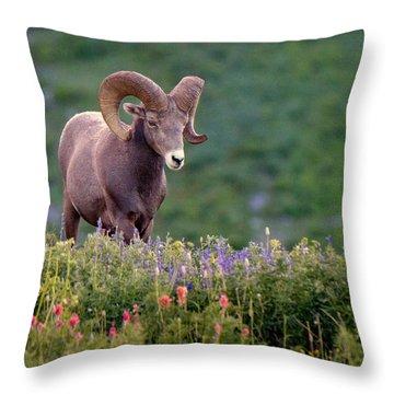 Wild Journey Throw Pillow