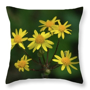 Throw Pillow featuring the photograph Wild Meadow Daisies by LeeAnn McLaneGoetz McLaneGoetzStudioLLCcom