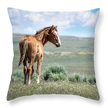 Wild Mustang Colt Of Sand Wash Basin Throw Pillow