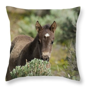 Wild Mustang Foal Throw Pillow