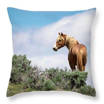 Wild Mustang Stallion Of Sand Wash Basin Throw Pillow