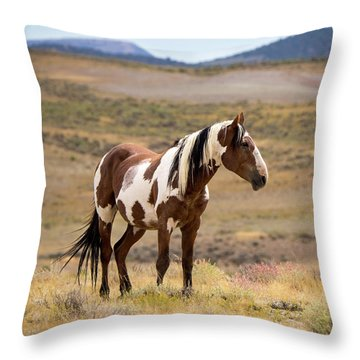 Wild Mustang Stallion Picasso Of Sand Wash Basin Throw Pillow