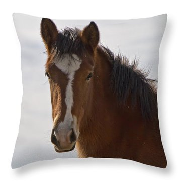 Wild Mustang Yearling Throw Pillow