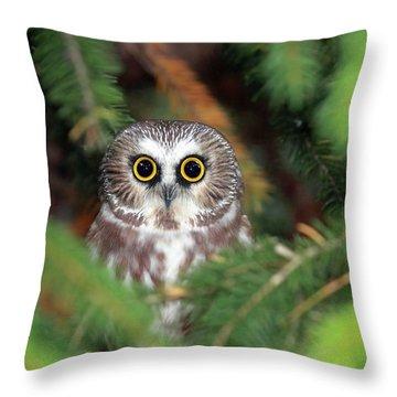 Whet Owl Throw Pillows
