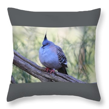 Wild Pigeon Throw Pillow