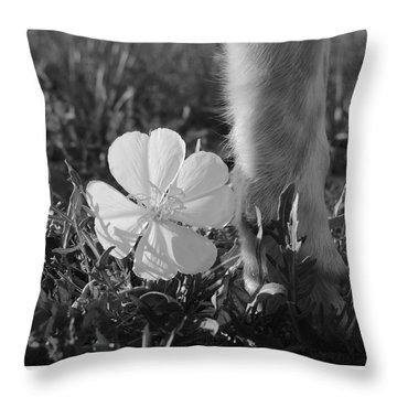 Wild Primrose With Dog's Foot Throw Pillow