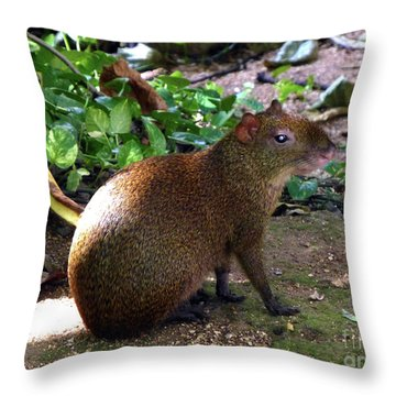 Throw Pillow featuring the photograph Wild Rodent  by Francesca Mackenney