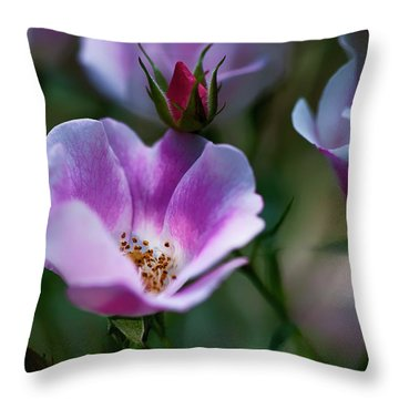 Wild Rose 7 Throw Pillow