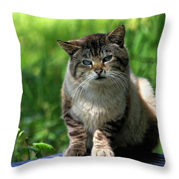 Throw Pillow featuring the photograph Wild Siamese by Chriss Pagani
