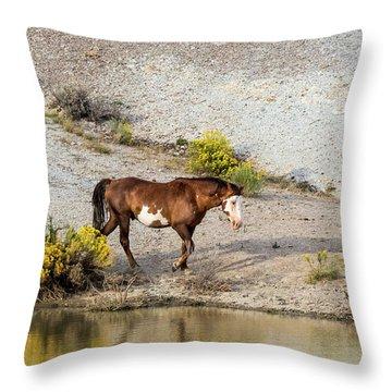 Wild Stallion Of Sand Wash Basin, Raindance Throw Pillow