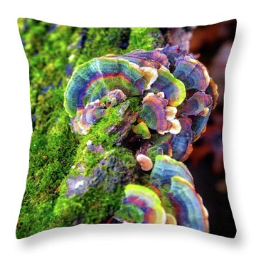 Throw Pillow featuring the photograph Wild Striped Mushroom Growing On Tree - Paradise Springs - Kettle Moraine State Forest by Jennifer Rondinelli Reilly - Fine Art Photography