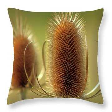 Wild Teasel Throw Pillow