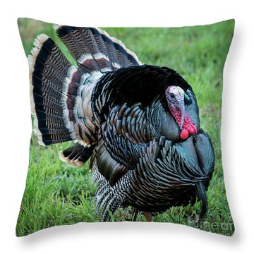 Wild Turkey - Capitol Reef National Park - Utah Throw Pillow by Gary Whitton