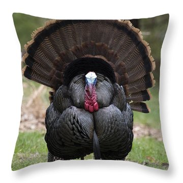 Wild Turkey In All Its Glory Throw Pillow