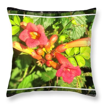 Throw Pillow featuring the photograph Wild Vine Red by Shirley Moravec