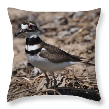 Wildbird Killdeer Mother Throw Pillow