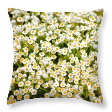 Throw Pillow featuring the photograph Wildflowers by Holly Kempe