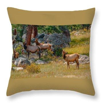 Wildlife N Humor Throw Pillow