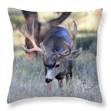 Throw Pillow featuring the photograph Wildlife Wonder by Shane Bechler