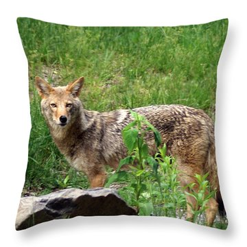 Wiley Coyote Throw Pillow by Marty Koch
