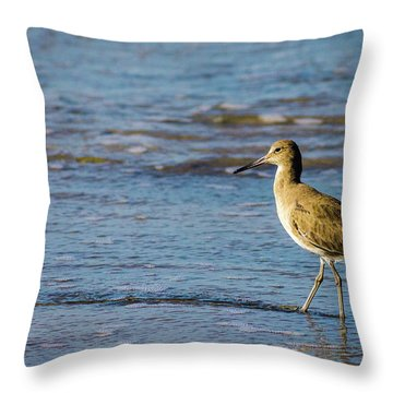 Willet 2 Throw Pillow