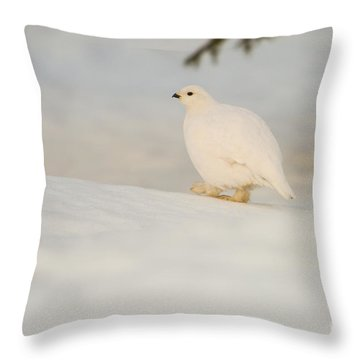 Willow Ptarmigan Lagopus Lagopus Throw Pillow by Gabor Pozsgai