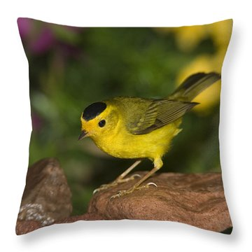 Wilsons Warbler Wilsonia Pusilla Male Throw Pillow by Tom Vezo