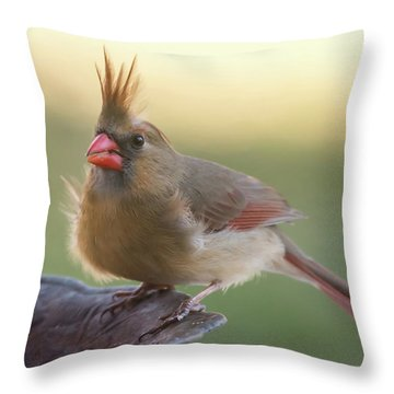 Throw Pillow featuring the photograph Wind Blown Cardinal  by Terry DeLuco