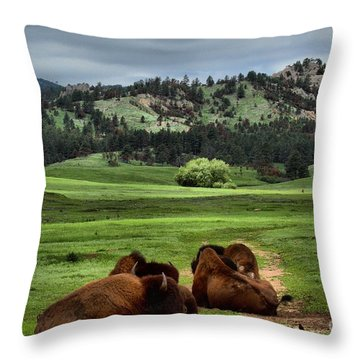 Wind Cave Bison Throw Pillow