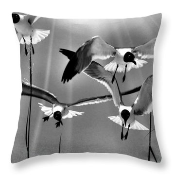 Throw Pillow featuring the photograph Wind Swept Bw by Jan Amiss Photography