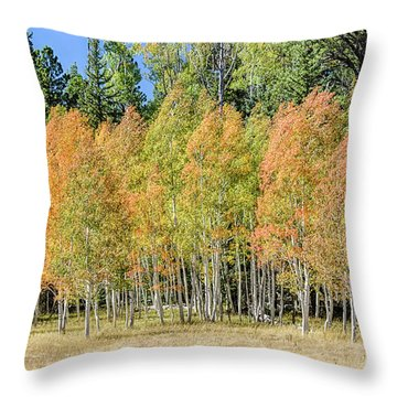 Windblown Aspen Throw Pillow