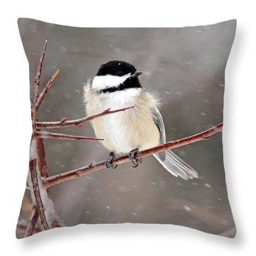 Windblown Chickadee Throw Pillow by Debbie Oppermann