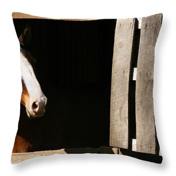 Throw Pillow featuring the photograph Window by Angela Rath