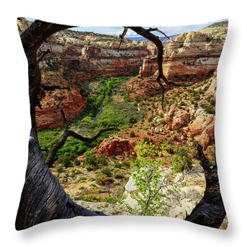 Throw Pillow featuring the photograph Window by Chad Dutson