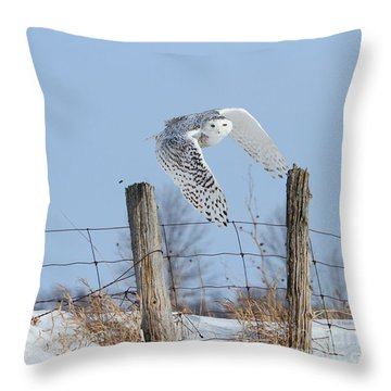 Windswept Glory Throw Pillow