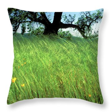 Windswept Poppies Throw Pillow by Kathy Yates