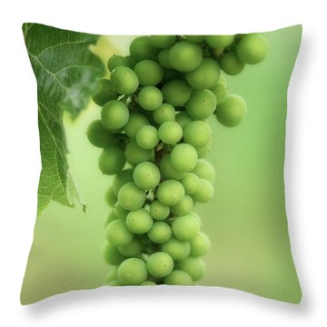 Wine Before Picture Throw Pillow by Lisa Knechtel
