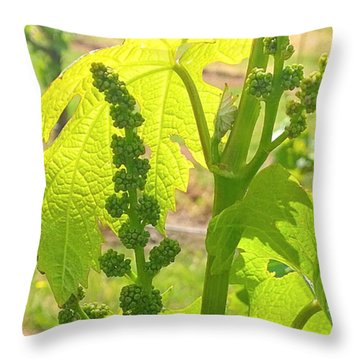 Food And Beverage Throw Pillows