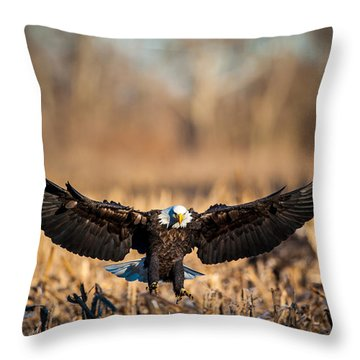 Throw Pillow featuring the photograph Wing Span by Jeff Phillippi