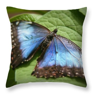 Wingdrops Throw Pillow by David S Reynolds